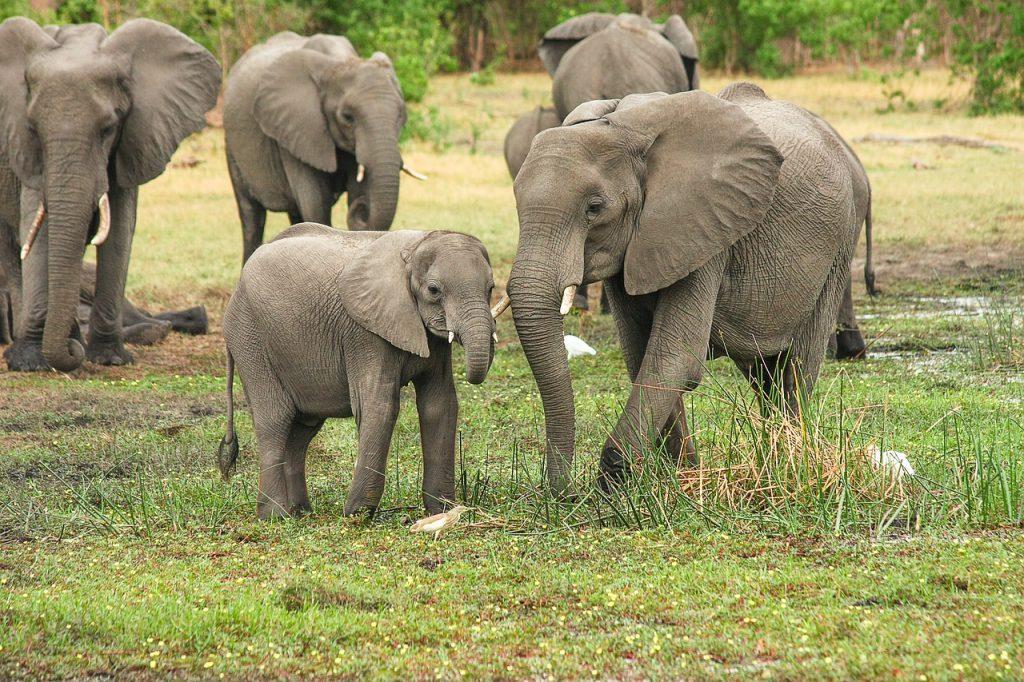 Ботсвана, Африка