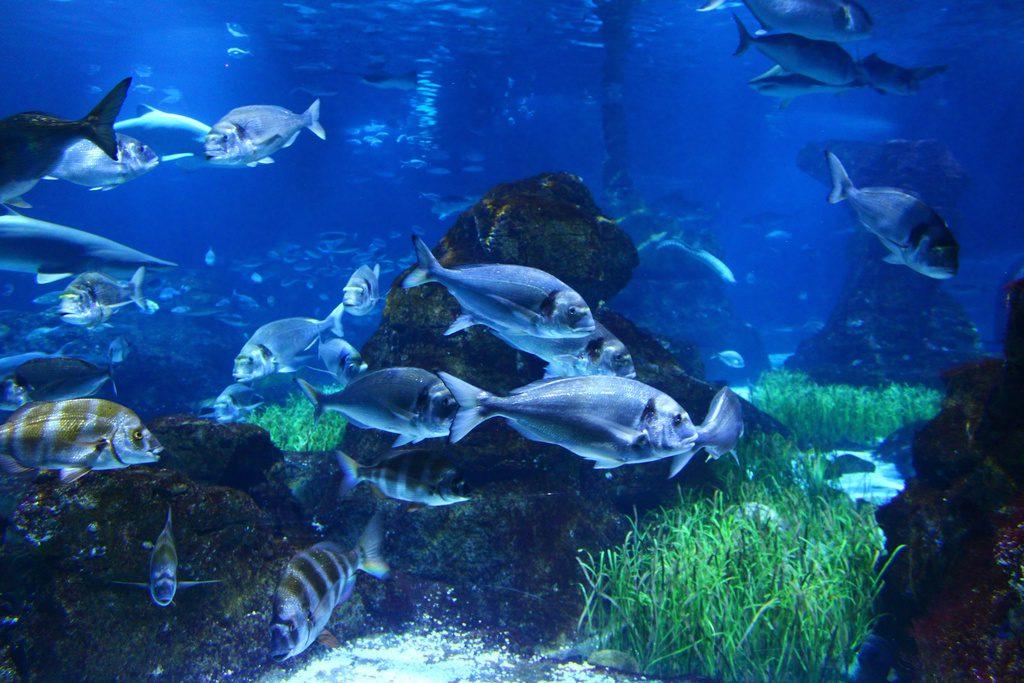 Барселона, аквариум