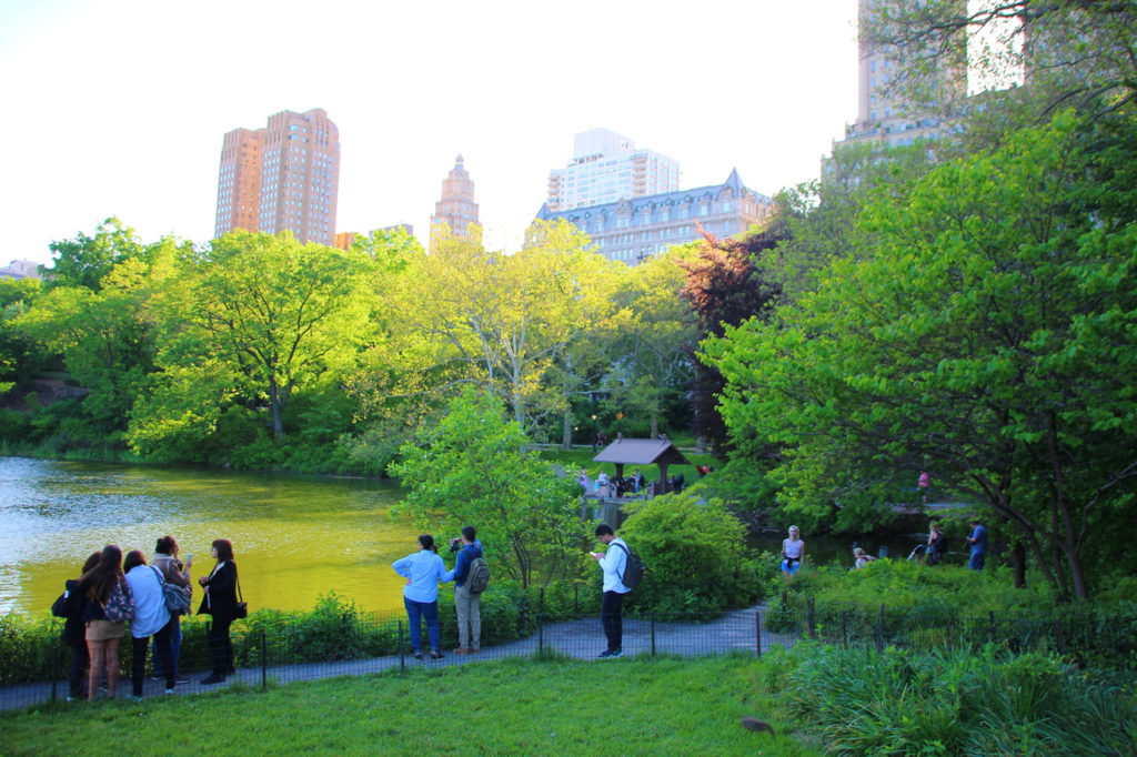 USA, New York, Central Park