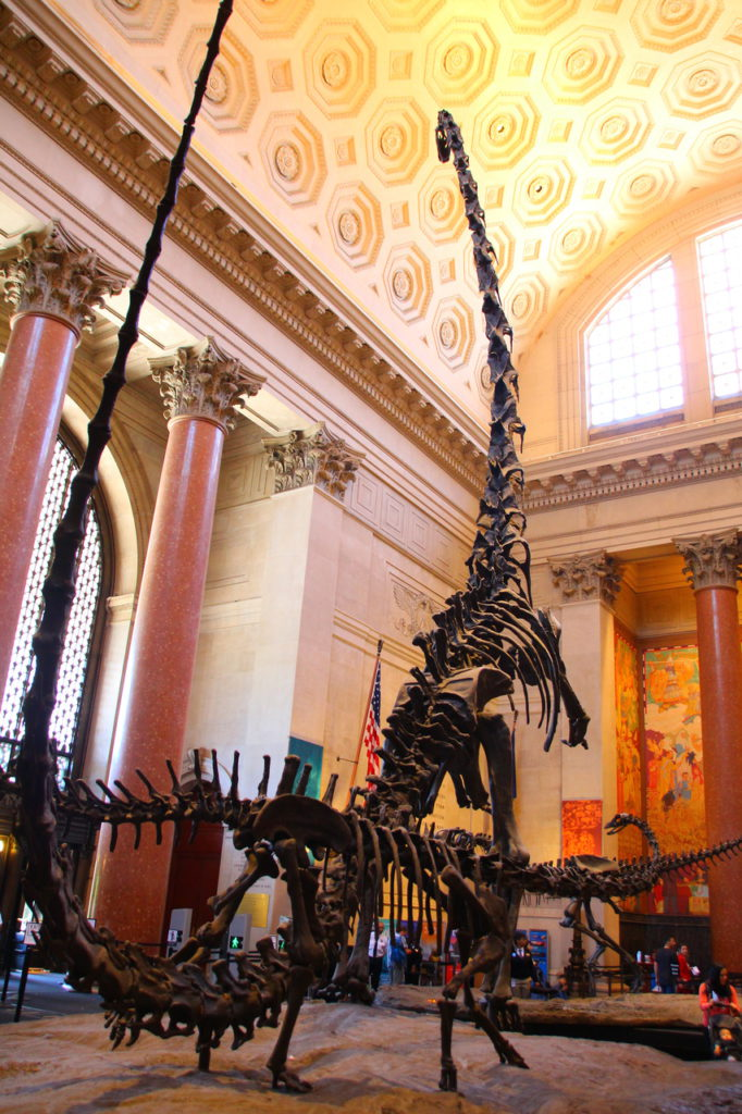AMNH, American museum of natural history, New York, USA